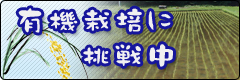 banner_003